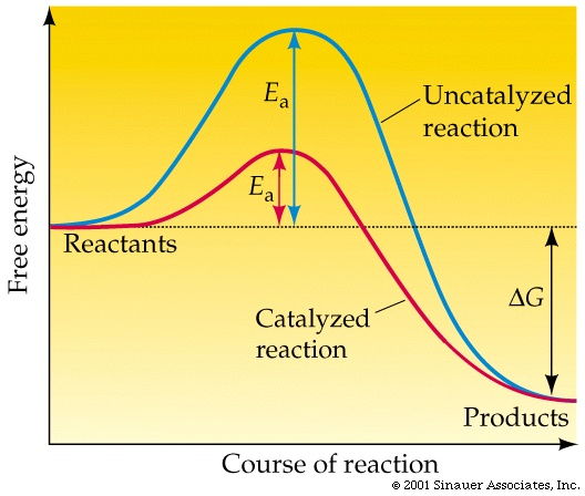 reaction rate and activation energy relationship to power